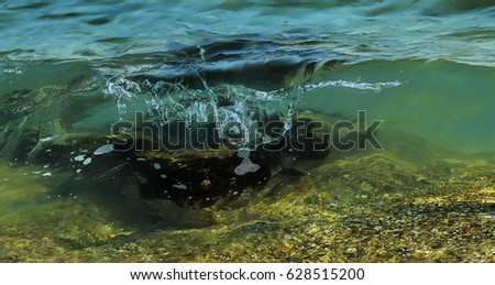 Coastal wave running over the underwater stone. Close up. Copy space