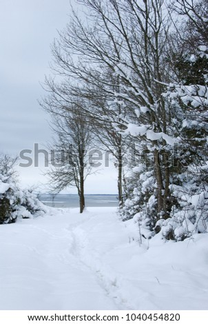 Coastal winter landscape with snowcapped trees