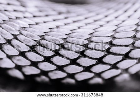 Cobra Texture - stock photo