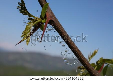 Cobweb after rain on the mountain - stock photo