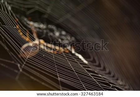 Cobweb and unfocused spider - stock photo