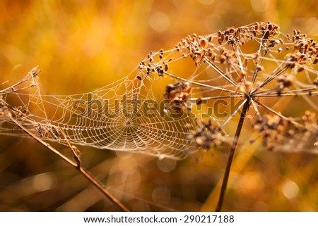 Cobweb covered in dew drops at meadow - stock photo