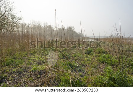 Cobweb in a foggy field along a lake in spring - stock photo