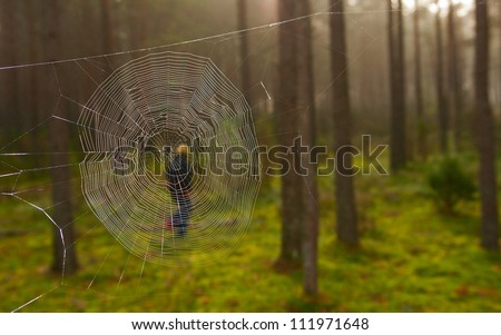 Cobweb in autumn forest. The woman in the background - stock photo