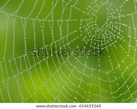Cobweb ,spiderweb with water drop. Close up Cobweb ,spiderweb with water drop.