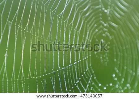 Cobweb with dew. Spider web with water drops.