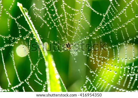 Cobwebs on the grass with dew drops - selective focus, copy space - stock photo