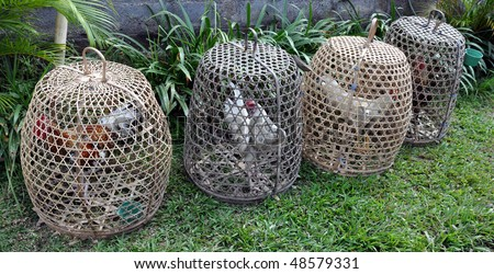 Cock fight cages - stock photo