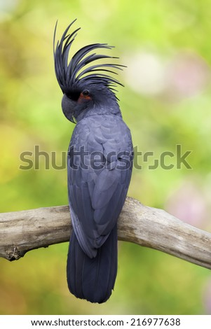 cockatoo perched on a tree - stock photo