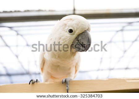 cockatoo perching on a fence