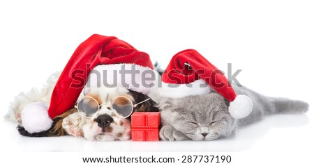 Cocker Spaniel puppy and tiny kitten with gift box sleeping in red santa hats. isolated on white background - stock photo