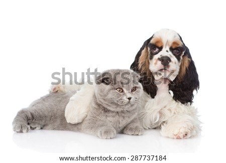 Cocker Spaniel puppy embracing young kitten. isolated on white background - stock photo