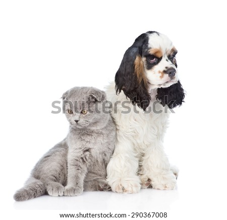 Cocker Spaniel puppy sitting with young kitten. isolated on white background - stock photo