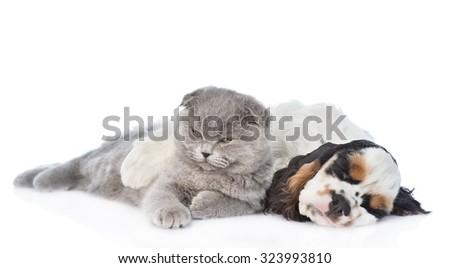 Cocker Spaniel puppy sleep with kitten. isolated on white background - stock photo