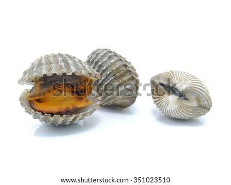 Cockle isolated on white background.