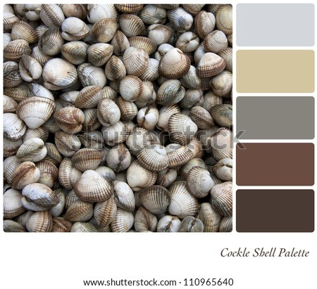 Cockle shell background colour palette with complimentary swatches. - stock photo