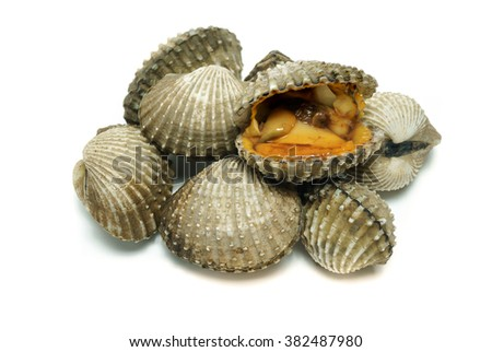 cockles in white background.