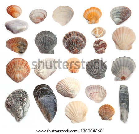 Cockleshells from the Black Sea on a white background - stock photo