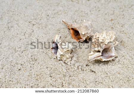 cockleshells lie on sand