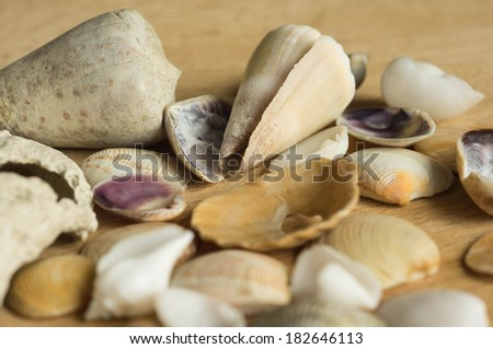 Cockleshells of a different form on a wooden surface close up