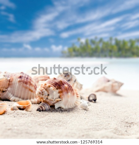 Cockleshells on sea sand, focus on a foreground - stock photo