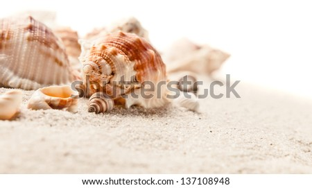 Cockleshells on sea sand,isolated on a white background - stock photo