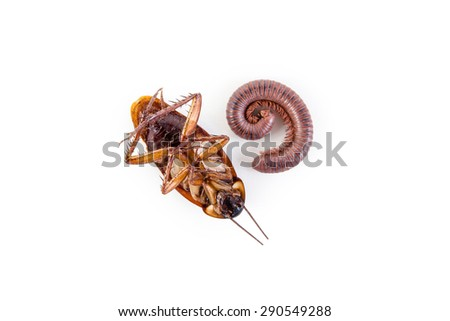 Cockroach and Millipede isolate on white background. - stock photo