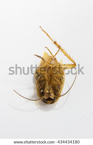cockroach Dead Baby cockroach on white background - stock photo
