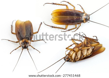 Cockroach dead isolated on a white background - stock photo