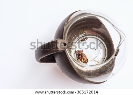 cockroach dead show the whole body with cockroach egg in teapot  - stock photo