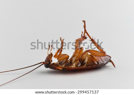 cockroach is dead on white table background