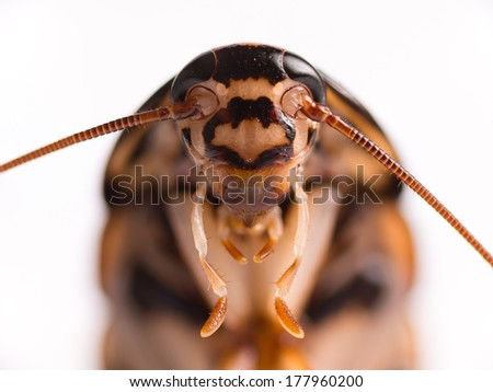Cockroach isolate background. - stock photo