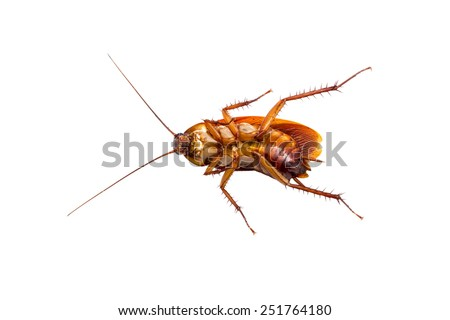 Cockroach isolated on a white background  - stock photo