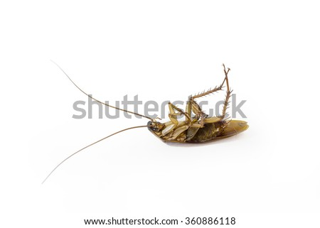Cockroach isolated on a white background.