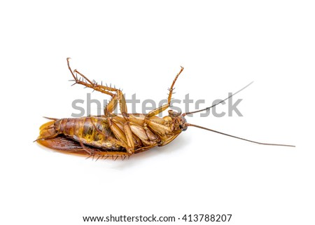 Cockroach isolated on a white background
