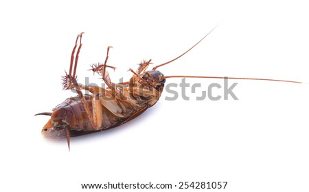 Cockroach isolated on white background, six legs