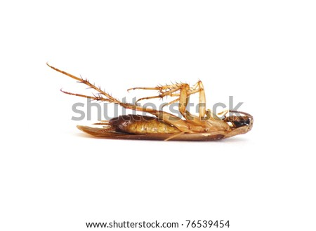 cockroach lying upside down