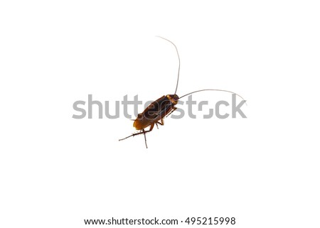 Cockroach on the floor upstage White background