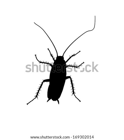 Cockroach silhouette isolated on white background. One click to transform to vector. - stock photo