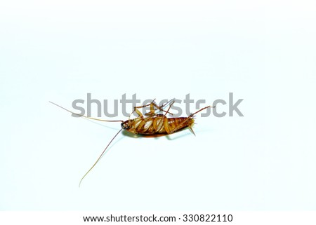 Cockroach was dead. on a white background