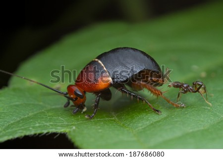 cockroach with ant on green leaf - stock photo