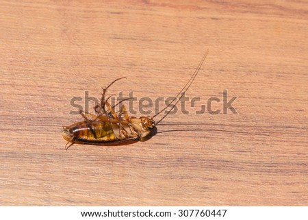 Cockroaches lying dead on on the wooden floor