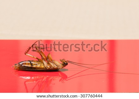 Cockroaches lying dead on red background.