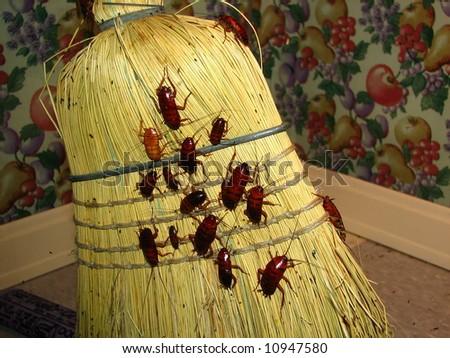 Cockroaches on Broom - stock photo