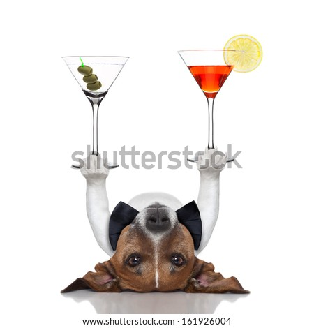 cocktail dog balancing two fancy martinis with paws - stock photo