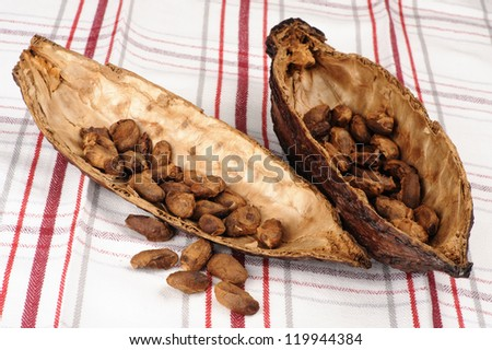 Cocoa fruit with unpeeled  beans - stock photo