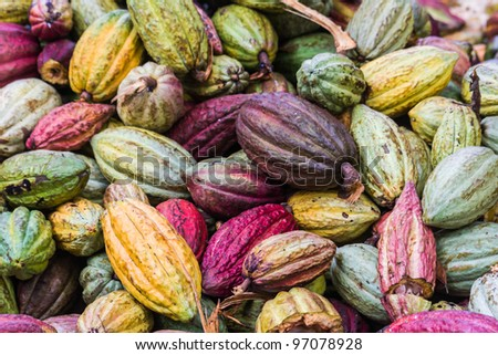 Cocoa pods from Ambanja, Madagascar - stock photo
