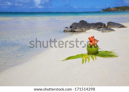 Coconut at beach of Mauritius, Belle Mare at paradise island - stock photo