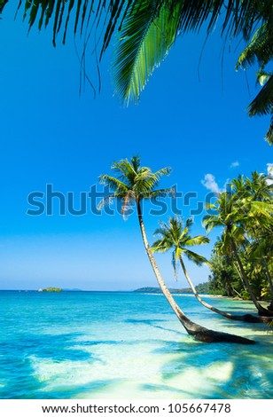 Coconut Coast Palm Panorama - stock photo