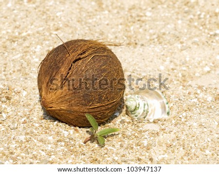Coconut, conch shell and green sprout on sand taken closeup.